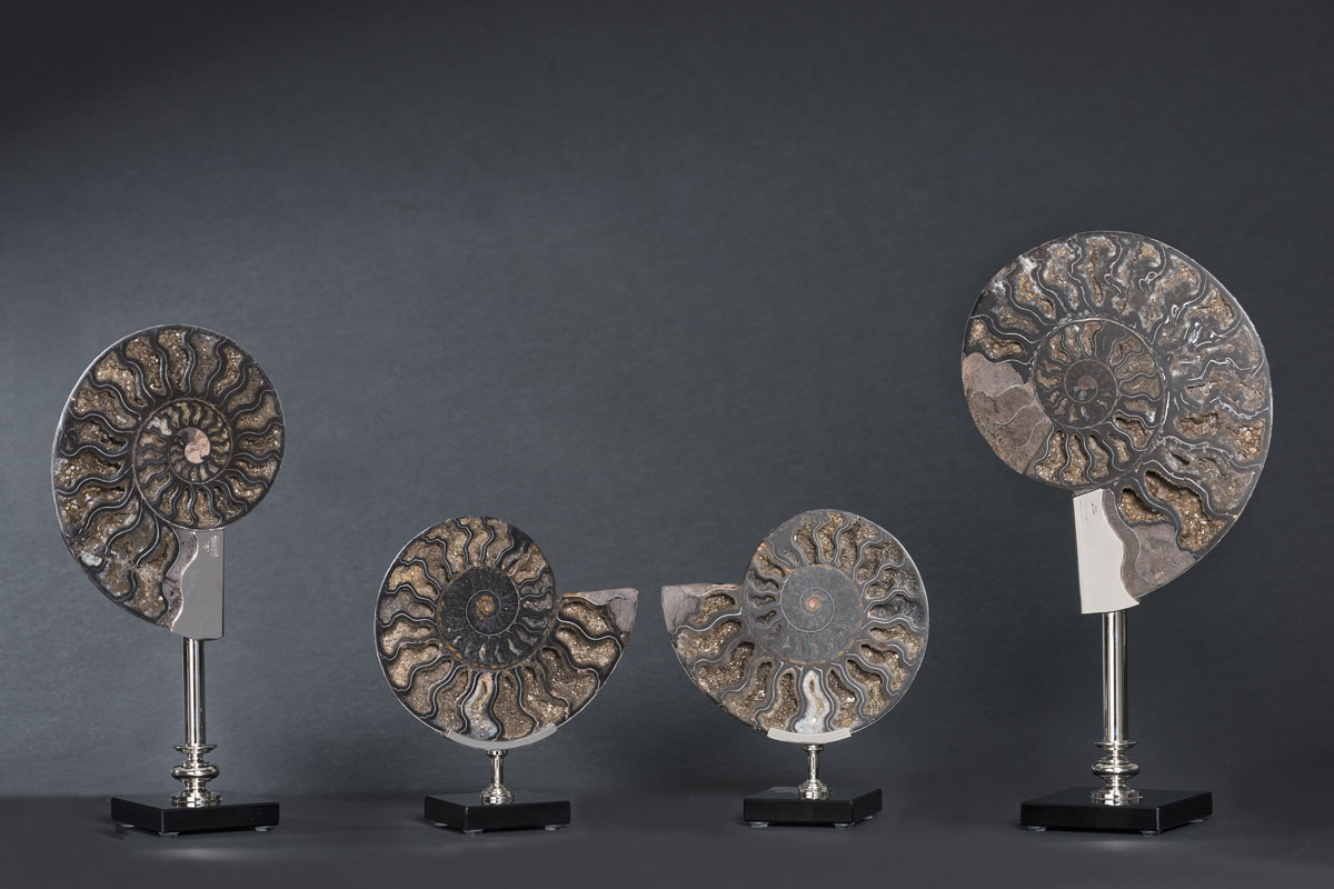 Ammonites-group5-