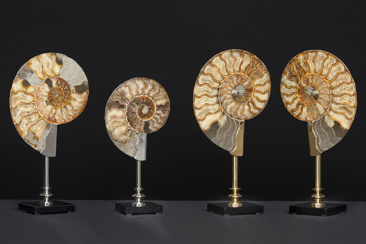 Ammonites-group6-